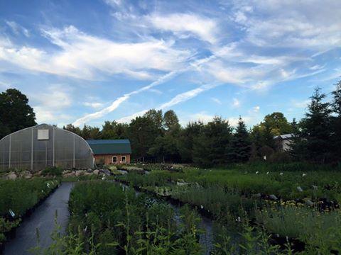 FULL CIRCLE GARDENS | Vermont Grown Hardy Perennials