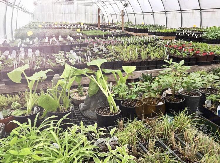 Archivos Perennials resistentes - bulbo del bulbo de Michigan Blog del bulbo de Michigan